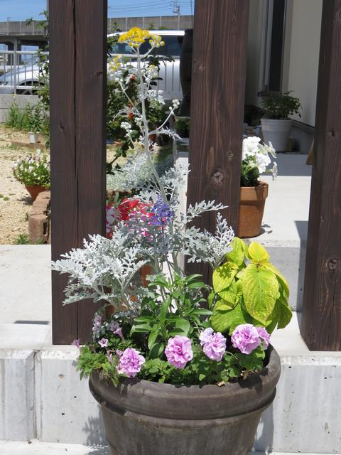 夏の寄せ植えの画像