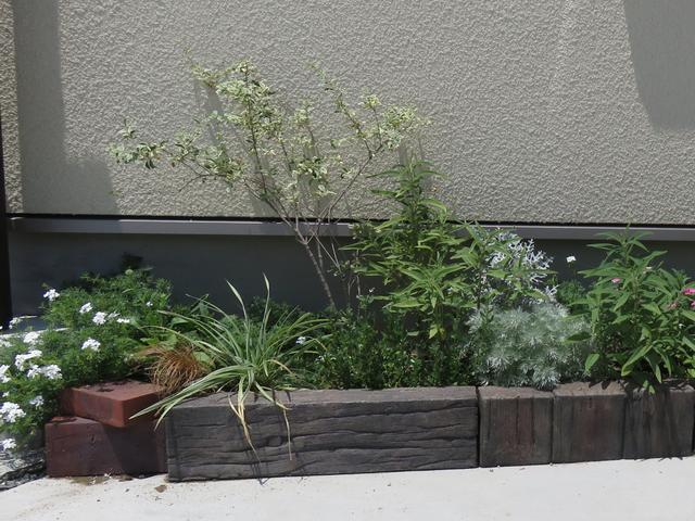 花壇の写真左半分