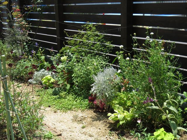庭の植栽全景