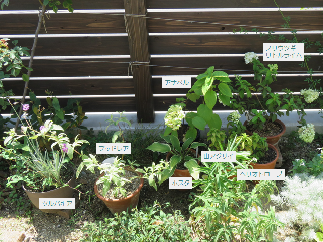 鉢植えの説明