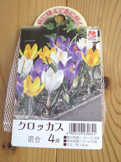 花の大和 クロッカスの球根
