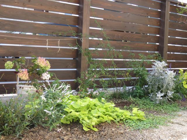 庭の植栽の画像