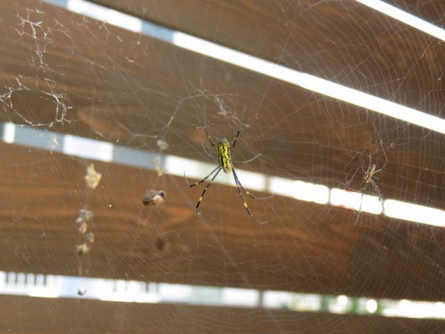 蜘蛛の巣の画像