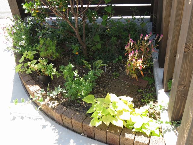 秋のコーナー花壇の画像