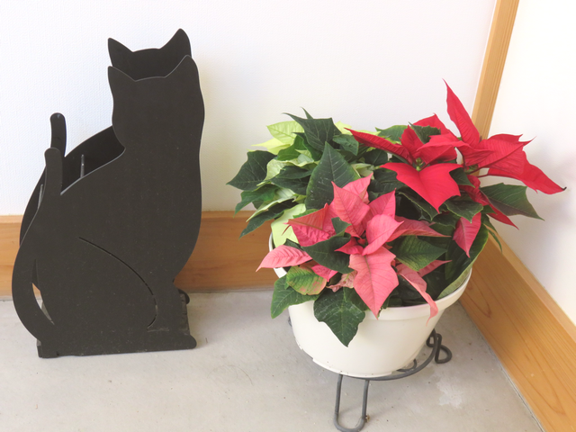 黒猫の傘立てとポインセチアの寄せ植えの画像