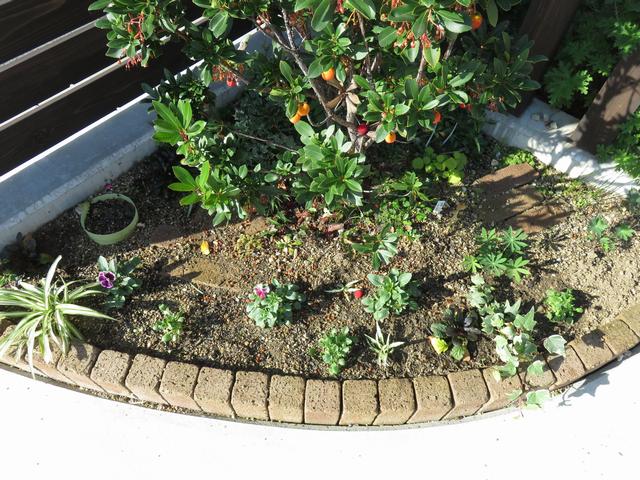 11月のコーナー花壇