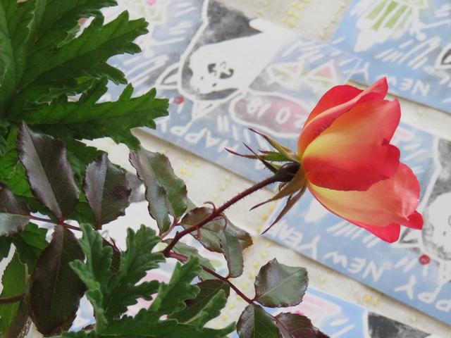 バラ・カクテルの花と年賀状
