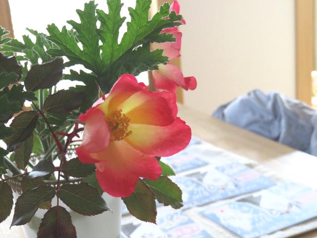 バラ・カクテルの花