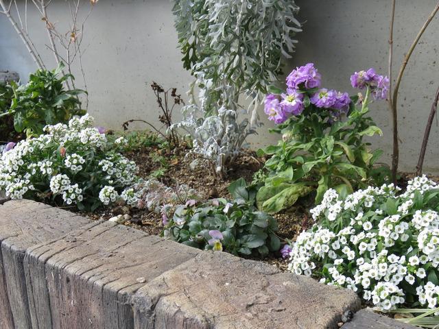 花が少ないビオラ