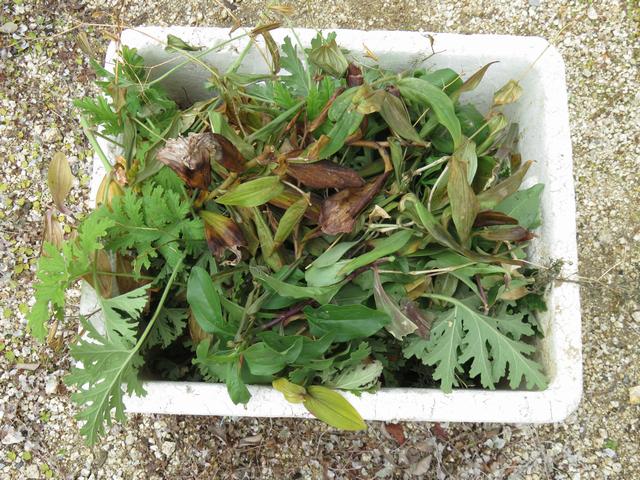 剪定した枝や葉っぱを入れたゴミ箱
