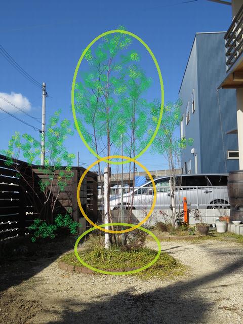 植栽で高さのバランスを書いた画像
