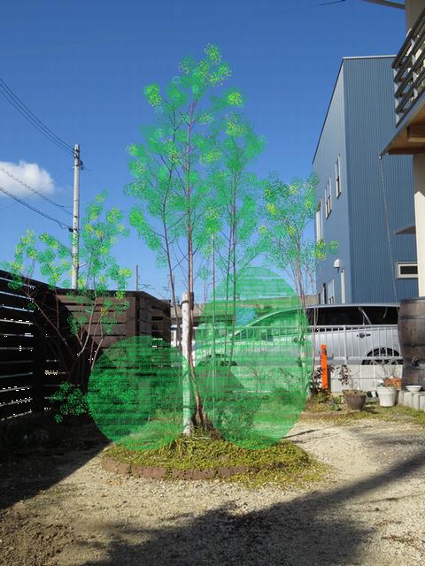 植栽の左右バランスを検討する画像・右低左高