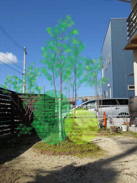 植栽の左右バランスを検討する画像・右高左低明