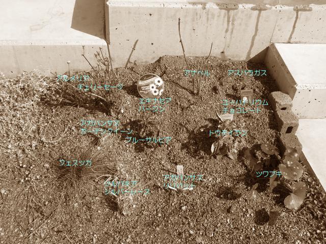 植栽に植えた植物名を書いたメモ