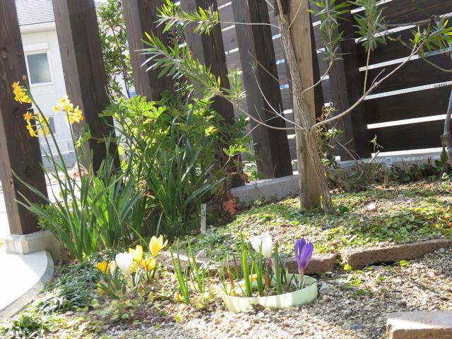 低い位置から撮った庭の写真