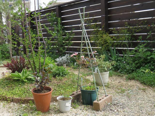 クレマチスの鉢を置いている庭の様子