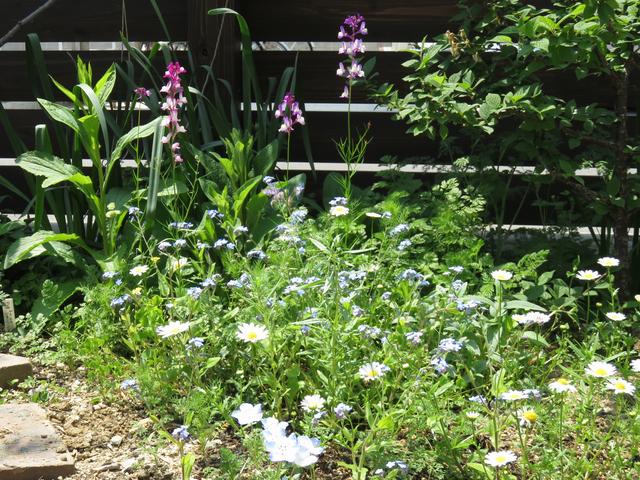 ナチュラルガーデンっぽい庭の一角