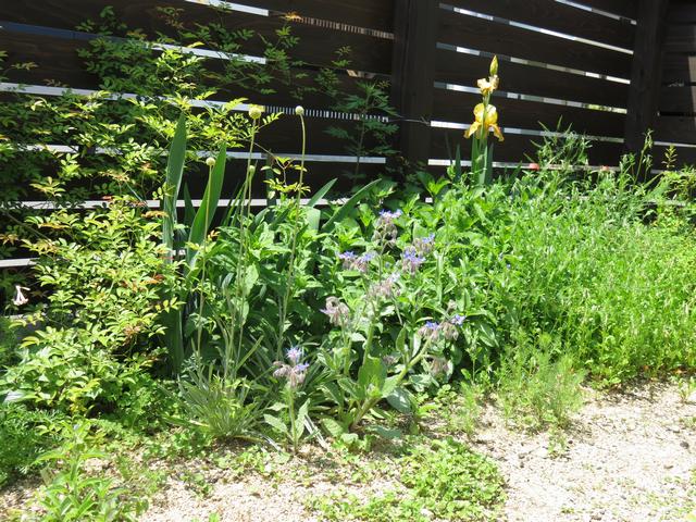 GWの庭の風景の画像