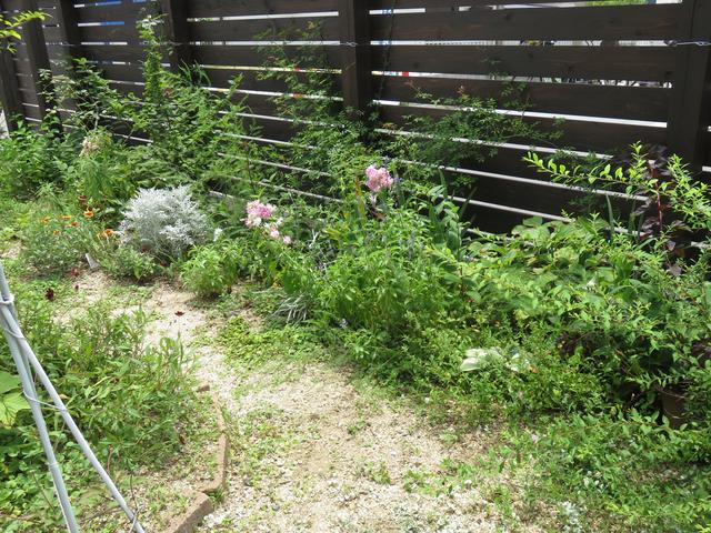7月上旬の庭の様子