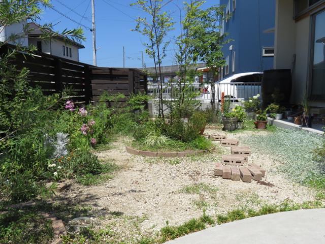 2018年7月の庭の全景