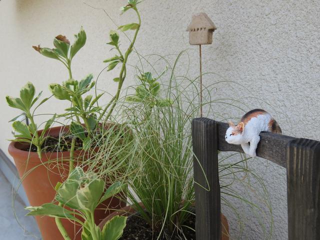 斑入りフッキソウとカレックスの葉
