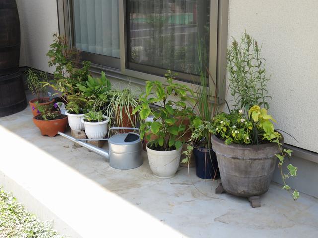 居間の掃き出し窓の前に植木鉢を並べた様子