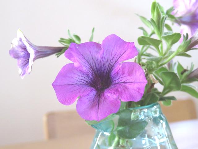 紫のペチュニアの花を飾った花瓶の画像