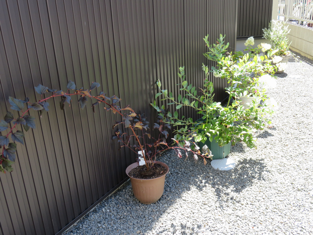 家の北側に並べた植木鉢