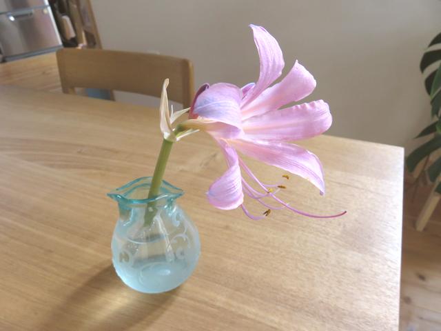 折れて花瓶に差した夏水仙の花