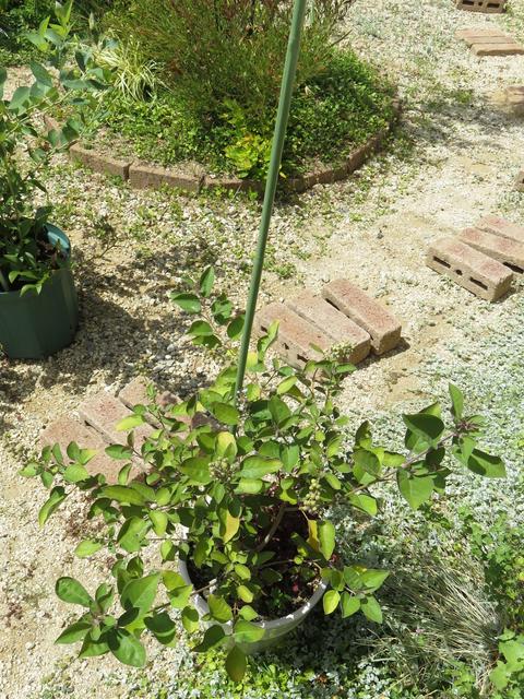 支柱を刺した植木鉢