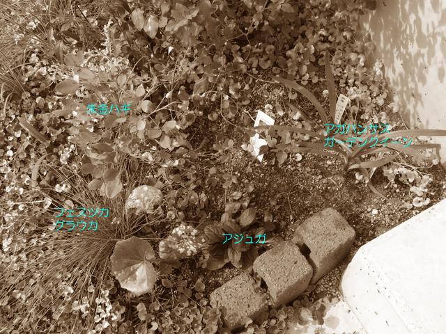 玄関先の植栽の配置図