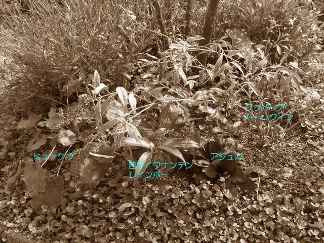 エゴノキの植栽の配置図
