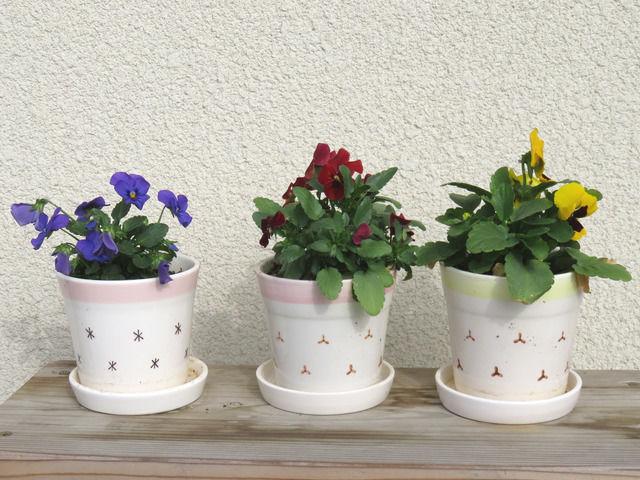 小さな植木鉢に植えられたビオラ