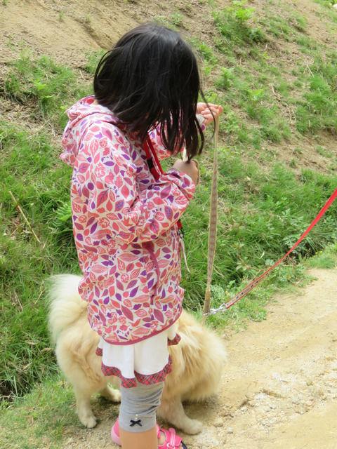 お散歩犬のミルクちゃん