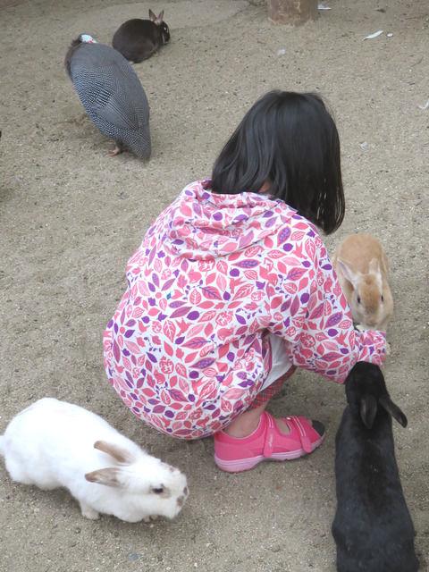 渋川動物公園のふれあい広場のうさぎ
