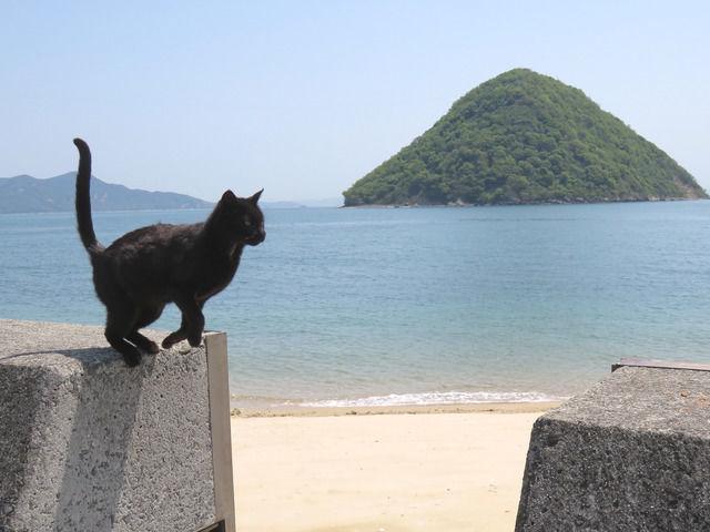 ジャンプの踏切りをしている黒猫