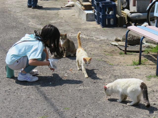 お酒やさんの前では猫の集会