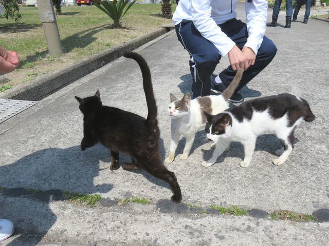 佐柳島猫島の本浦港のねこ