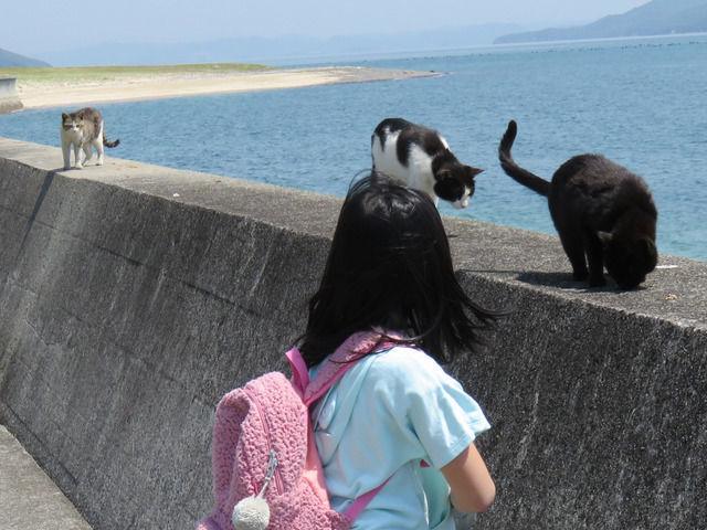 猫が3匹並んだ堤防
