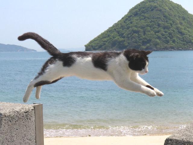 佐柳島の名物の跳び猫