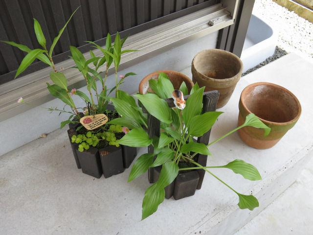しろうと工房さんの寄せ植えと植木鉢