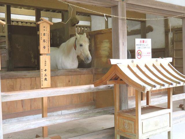 金刀比羅神社の白馬