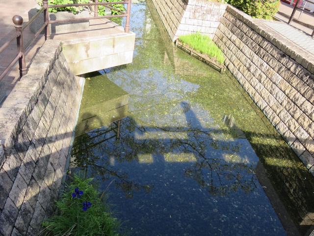 はりまや橋から見下ろした川の画像