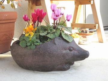 ハリネズミの鉢の寄せ植え ビオラ・ガーデンシクラメン