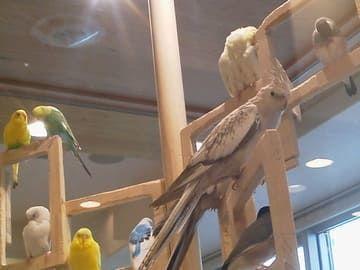 ことりカフェの鳥たち