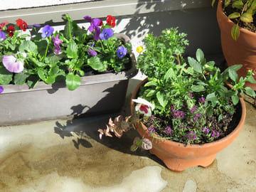 植え替えた寄せ植え植木鉢