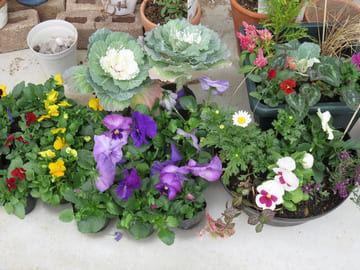バザーで購入した花の苗と寄せ植え