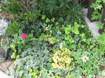 コーナー花壇の足元のアップ