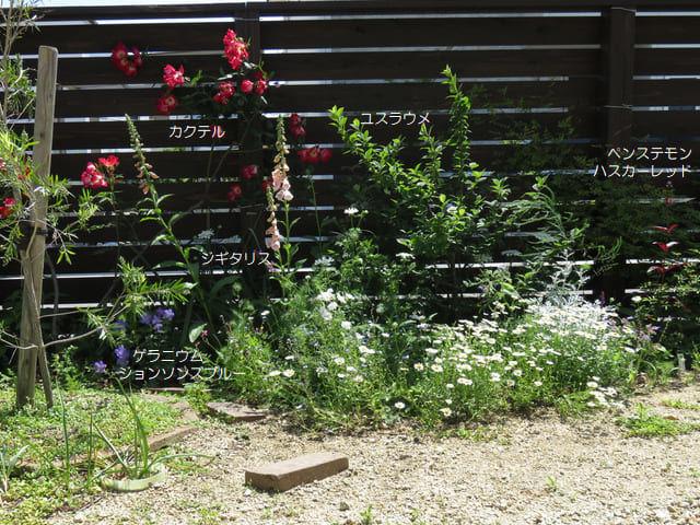 2018年5月の庭の一隅 カクテル ジギタリス ゲラニウム ペンステモンなど