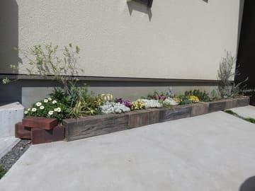 ビオラとスイートアリッサムの花壇の全景